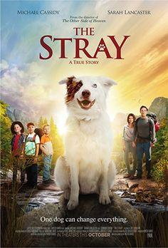 The Stray (2017) TÜRKÇE ALTYAZILI BrRip Hızlı Torrent İndir