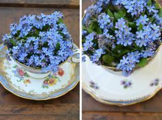 China tea cups with Forget-Me-Nots.