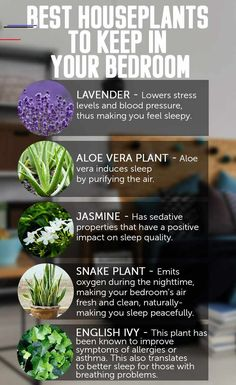 Best Indoor Plants for Allergies . Best Indoor Plants for Allergies . Did You Know that some Indoor Plants Can Protect You From Plantas Indoor, Best Indoor Plants, Jasmine Plant Indoor, Plants For Home, Indoor Lavender Plant, Lavender Plant Care, Ivy Plant Indoor, Indoor Plants Clean Air, Indoor Trees
