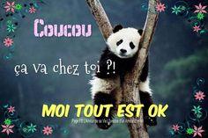 Image Panda, Funny Emoticons, Bon Weekend, New Years Eve Party, Humor, Panda Bear, Smiley, Minions, Good Morning