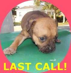 LUIGI (A1674707) I am a male black and tan Terrier mix. The shelter staff think I am about 4 weeks old. I was found as a stray and I may be available for adoption on 01/23/2015. — hier: Miami Dade County Animal Services. https://www.facebook.com/urgentdogsofmiami/photos/pb.191859757515102.-2207520000.1422133713./915609805140090/?type=3&theater