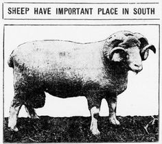 Crossville Chronicle. August 4, 1915. Agriculture Industry, Tennessee, Sheep, Moose Art, Industrial, Animals, Animales, Animaux, Industrial Music