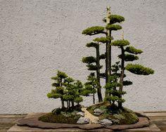 miniature bonsai forests 15 15 Beautiful Bonsai Forests