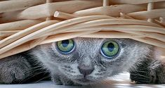 NATURE - Google+ - Is it #Caturday already?