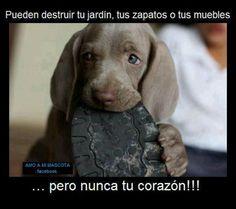 puede destruir tu jardin,tus zapatos o tus muebles pero nunca tu corazón!!!