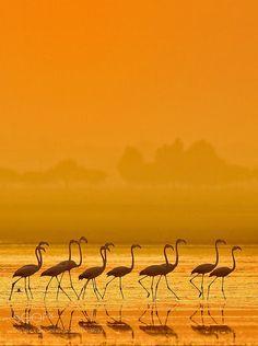 Walk of the Flamingos ;)
