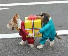 perro-disfrazado-12