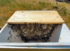 natural beekeeping by the Bee Natural Guy