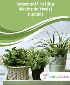 #Bezsenność: #rośliny #idealne do #Twojej sypialni  Czy wiedziałaś o tym, że waleriana - oprócz tego, że jest #idealna do naparów i #relaksujących herbatek - może nam pomóc #zrelaksować się przed snem, a #nawet lepiej i głębiej spać? Wystarczy, że #umieścimy tę #roślinę w #naszej #sypialni.