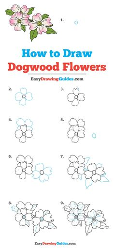 Learn How to Draw Dogwood Flowers: Easy Step-by-Step Drawing Tutorial for Kids and Beginners. #Dogwood #Flowers #DrawingTutorial #EasyDrawing See the full tutorial at https://easydrawingguides.com/how-to-draw-dogwood-flowers/.