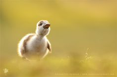 """https://flic.kr/p/rEy76A 