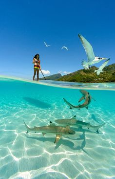 a girl paddle boarding with sharks in the crystal clear waters of French Polynesia. Photo by Chris Mclennan (summer sun paddle boarding) Under The Water, Under The Sea, Surfing Lifestyle, Fauna Marina, Shark Photos, Reef Shark, Shark Bait, Shark Shark, Shark Swimming