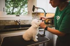 For Pets Hair Grooming At Your home ... Our Full Groom service for Long Haired Breeds includes a pre-groom, bath, brush, blow dry Dog Grooming Clippers, Blow Dry, Dog Training, Bath, Long Hair Styles, Bathing, Dog Training School, Long Hairstyle, Long Haircuts