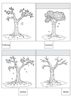 Pflanzenteile und ihre Funktionen | Pflanzenteile, Teile einer ...