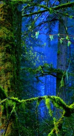 Lost in the forest . . . ahhhhh.