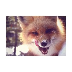 snow | Tumblr ❤ liked on Polyvore featuring animals, pictures, photos, backgrounds and images