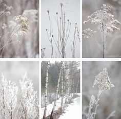 january colors Source by FrauFranziskaB Winter Pictures, Nature Pictures, Colorful Pictures, Winter Scenery, Winter Trees, Winter Love, Winter White, January Colors, Color Collage