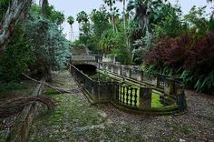 A mossy reflecting pool on an abandoned estate in Florida.