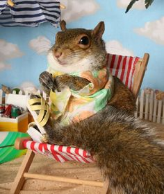 22. Squirrels Who Think They Are Having A Nice Day At The Beach  Most people don't know that squirrels are rodents and that these squirrels in particular are rodents with a very strong relaxation drive.