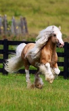 Horses are just the most beautiful creatures. All The Pretty Horses, Beautiful Horses, Animals Beautiful, Cute Animals, Horse Photos, Horse Pictures, Animal Pictures, Gypsy Horse, Majestic Horse