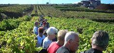 Image result for tenerife vineyard