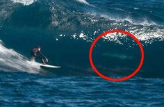 Great White Sharks surfing. | 37 Pictures That Prove Australia Is The Craziest