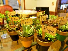 harry potter themed bridal shower succulent centerpieces. Small ones as favors? Depends on cost...