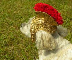 diy roman gladiator helmet for doggy Gladiator Costumes, Gladiator Helmet, Diy Dog Costumes, Dog Halloween Costumes, Couple Costumes, Halloween Makeup, Dog Helmet, Spray Paint Projects, Hallowen Ideas