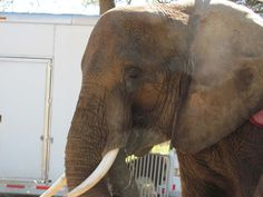 Demand that the USDA confiscate Nosey, send her to a reputable sanctuary, and revoke Hugo Liebel's exhibitor's license!
