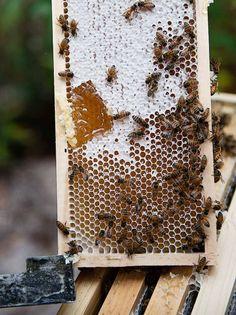 Miellerie: 'House of Honey' | Harvest