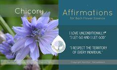 Bach Flowers, Holistic Approach, Emotional Healing, Medicinal Plants, Menopause, Flower Cards, Eos, Reiki, Flower Power