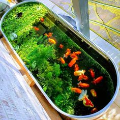 Have you heard of aquaponics? Aquaponics Combines the Growing of Fish and Plants You may grow plants in water and without soil and once one does this together with growing fish you are practicing aquaponics. Outdoor Fish Ponds, Indoor Pond, Indoor Water Garden, Small Water Gardens, Fish Pond Gardens, Garden Pond, Patio Pond, Ponds Backyard, Aquascaping
