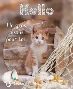 Bisous Gif, Images, Cats, Fair Grounds, Hello Sunday, Good Friday, Good Night, Good Morning Picture, Gatos