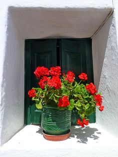 Green shutters and green pot filled with red flowers, Chora, Folegandros island, Cyclades, Greece