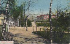 Birkenallea. Libau. Postcard1910