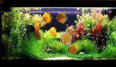 Aquariumfans.nl