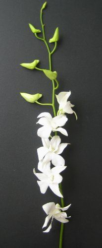Fresh Flowers - 20 Long Stemmed White Dendrobium Orchids - http://flowersnhoney.com/fresh-flowers-20-long-stemmed-white-dendrobium-orchids/