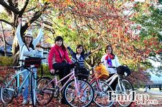 Mùa lá phong nhuộm đỏ cố đô Kyoto Nhật Bản
