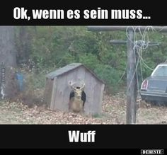 Dog looks weird today - Daily LOL Pics Funny Bird Pictures, Funny Images, Funny Photos, Random Pictures, Cute Animal Memes, Funny Animals, Cute Animals, Animal Fun, Humor Videos