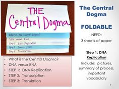 Central Dogma: DNA Replication, Transcription and Translation - Biology with Magbitang-Garcia Translation Biology, Dna Transcription And Translation, General Biology, Ap Biology, Central Dogma, Dna Facts, Dna Replication, 8th Grade Science, Dna Test