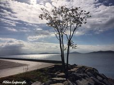 Suadiye sahil, tree, seaside , view ,landscape , photography,nildeninkadraji