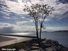 Suadiye sahil, tree, seaside , view ,landscape , photography,nildeninkadraji