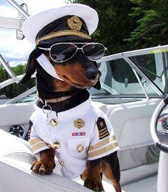 Ele não se deixa impedir por ventos polares | Community Post: 10 razões pelas quais Crusoe se tornará seu dachshund favorito