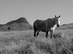 Mountain Sky Black And White Animal Themes Grass Sky Horse Livestock Grazing Animal Themes, Royalty Free Pictures, Livestock, Mammals, Grass, Mountain, Sky, Horses, Black And White