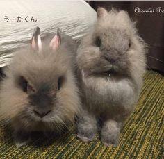 Beautiful Needle felting wool cute bunnies pets(Via @chocolatbox)