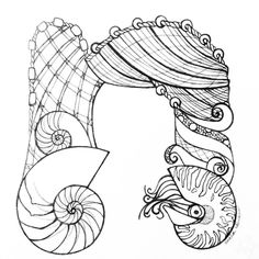 I just found a stack of illustrations I designed last year. They comprise a marine-themed alphabet. One day I hope to color them digitally. In the meantime, here's the pencil illustration: N is for nets and nautili. #arhsketches #nautilus Copyright Amalia Hillmann