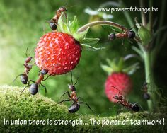 In union there is strength - The power of teamwork ! www.powerofchange.be