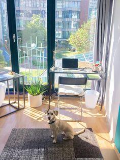 Arbeitsplatz. Gemütlich, hell und zu Hause lässt es sich gut arbeiten. Stylisch, modern with Bauhaus Design Details and minimalistic. Und der Hund ist mit dabei. // Wie arbeitet ihr und haltet euch fit?