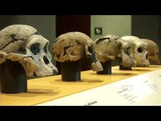 Experience Human Origins: A Smithsonian Institute Exhibit