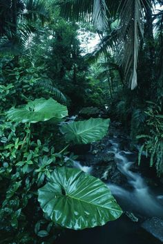 Rainforest - Wall Mural & Photo Wallpaper I have seen this from the start, holding your hand, pushing through the big green leaves. Photo Wallpaper, Nature Wallpaper, Landscape Model, Terrarium Plants, Amazon Rainforest, Eco Friendly House, Foliage Plants, Jungles, Wild Nature